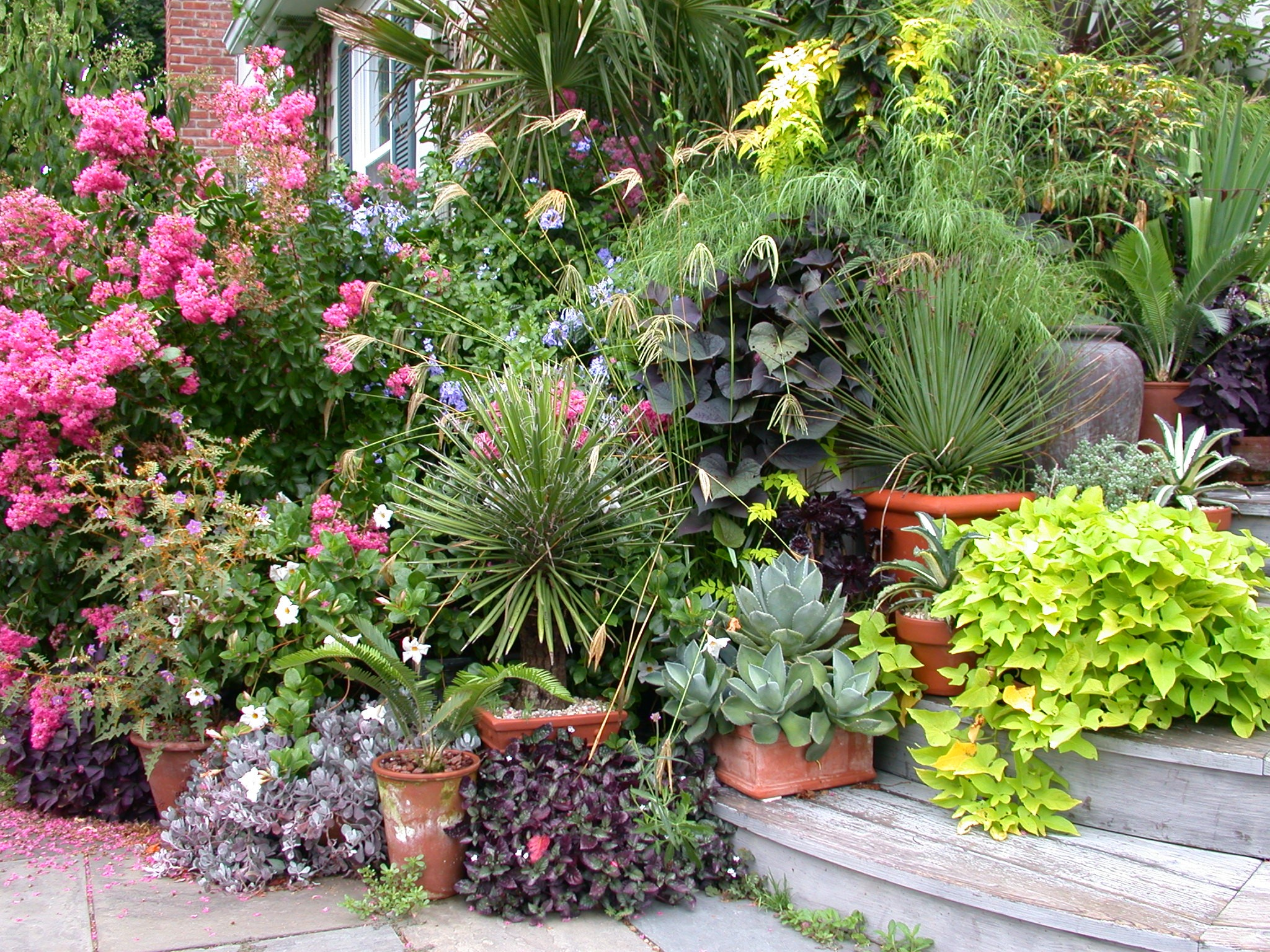 1000 images about tropical garden dreams on pinterest - Tropical container garden ...